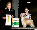 Jr. Showmanship