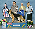 CH Enchanted's American Thunder-German Shepherd Dogs
