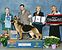 CH Enchanted's American Thunder-German Shepherd Dogs